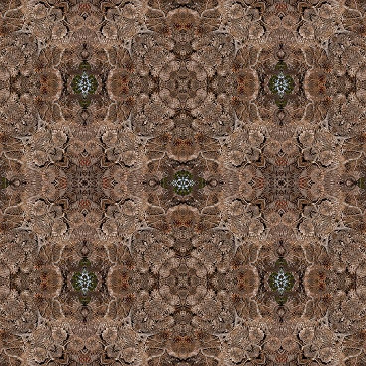 Pine Cone Mandala http://julianventer.com/ Share if you Please ©JulianVenter