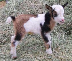 I quite fancy having a whole farm of miniature animals.