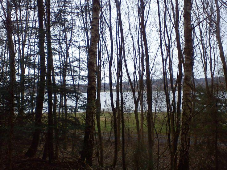 Skov, sø, kirke marts 2014