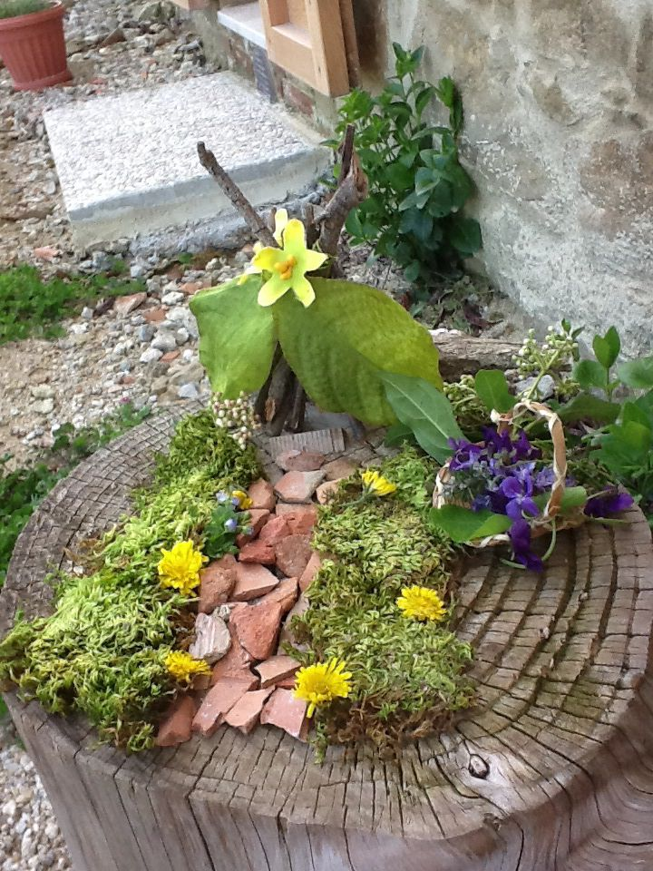 Create your own miniature garden or jungle!