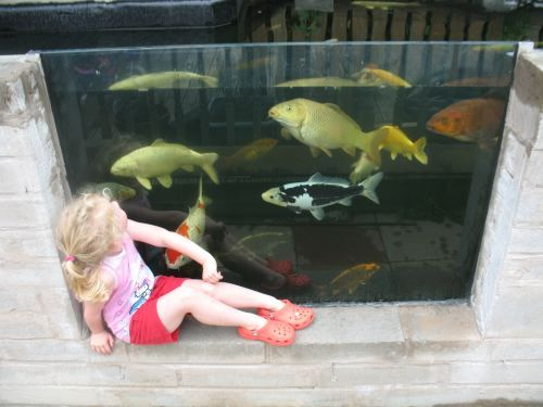 Mr Koi Gallery Custom Stainless Steel Pond Windows And