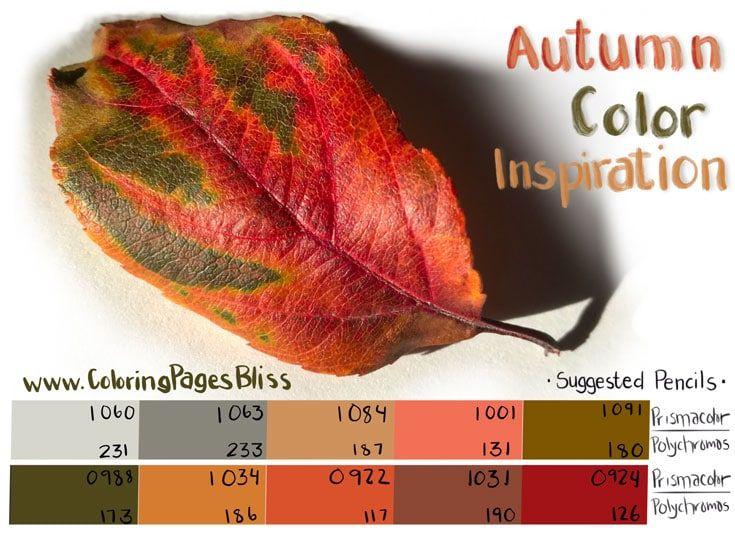 autumn-color-inspiration-leaf-color-palette.jpg 735×551 pixels