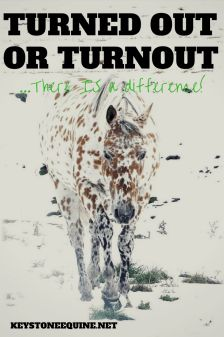 Turned out or turnout?  Mental health and wellness in horses, modern horse life, old time horse sense...