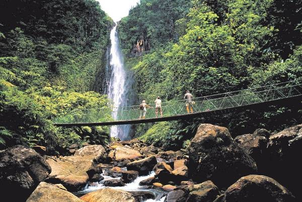 Guadeloupe : The tropical forest
