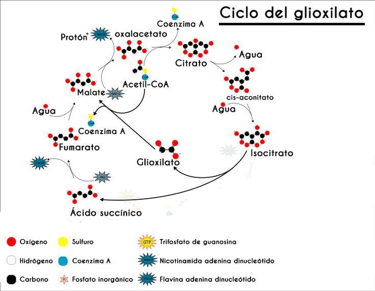 Rutas metabólicas: tipos y principales rutas en 2020..