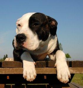Assurance chien – Comparez, choisissez, economisez !   Les soins vétérinaires peuvent vite s'accumuler : Vaccins, stérilisation, puces, etc. On n'en a jamais fini ! Une assurance chien prendra en charge vos factures et vous apportera sérénité et un sentiment de sécurité !   Prise en charge de vos factures vétérinaires Sécurité en cas d'accident ou maladie grave Economies d'argent    Comparez ---> http://assurances-animaux.org/comparateur-assurance-animaux/