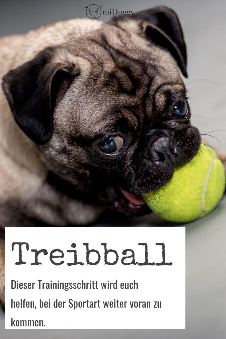 Die Arbeit Mit Boden Targets Als Hilfsmittel Beim Treibball Midoggy Community Treibball Erste Hilfe Hundehaltung