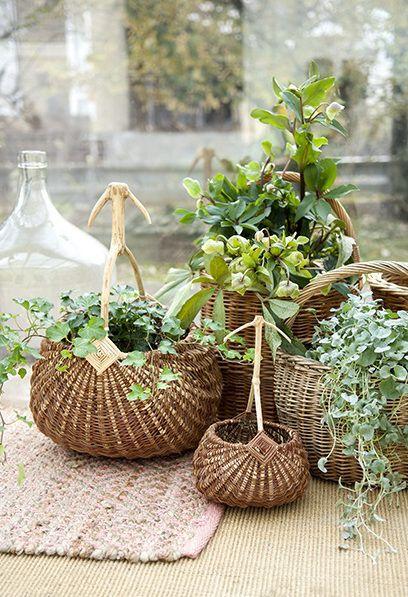 Pflanzen in Körben.