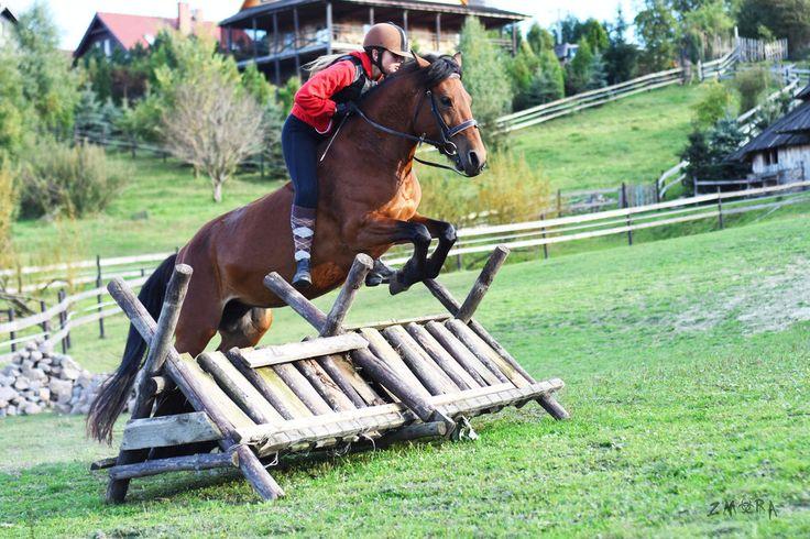 Wita - Hucul horse by Zmora97.deviantart.com on @DeviantArt