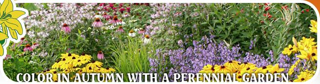 1000 Images About Pittsburgh Shade Loving Perennials On
