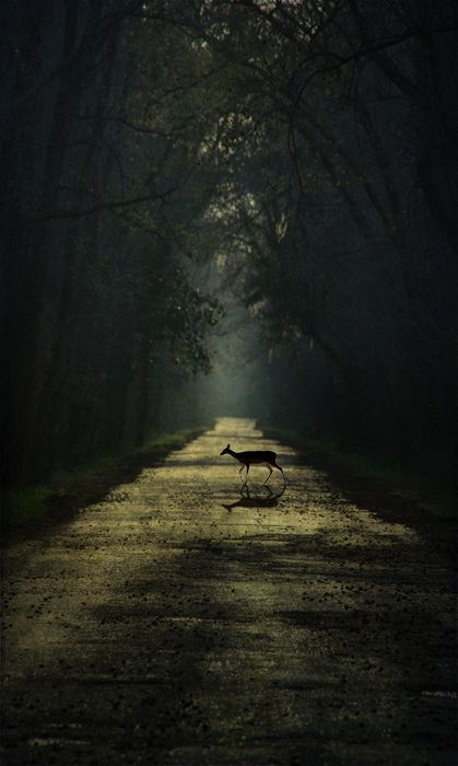 Still, my deer by Nathan Arthur