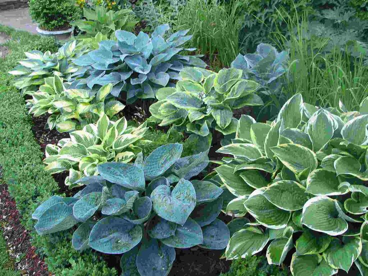 HostaGardens Ideas, Shady Gardens, Modern Gardens Design, Bing Image, Side Yards, Shades Plants, Backyards Ideas, Shades Gardens, Hosta Gardens