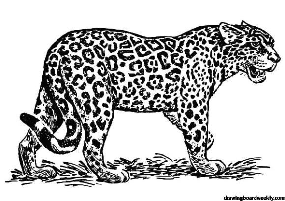 Jaguar Coloring Page Zoo Animal Coloring Pages Jaguar Animal Jaguar
