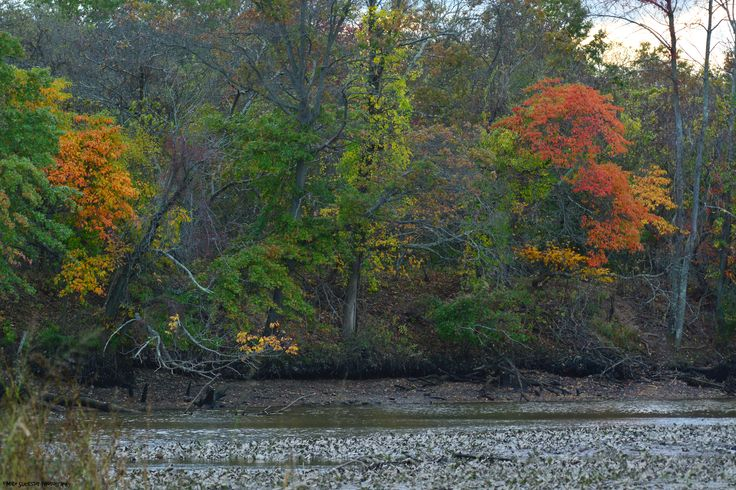A dash of autumn colors on Maple Beach, across Otter Creek.