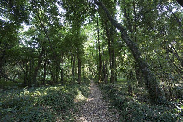 Imagen típica del frondoso bosque que recubre la isla de Cortegada. http://www.vivirgaliciaturismo.com/isla-de-cortegada-en-ria-de-arousa/