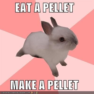 The Circle of Life--bunnies deliver up to 300 poops per day.