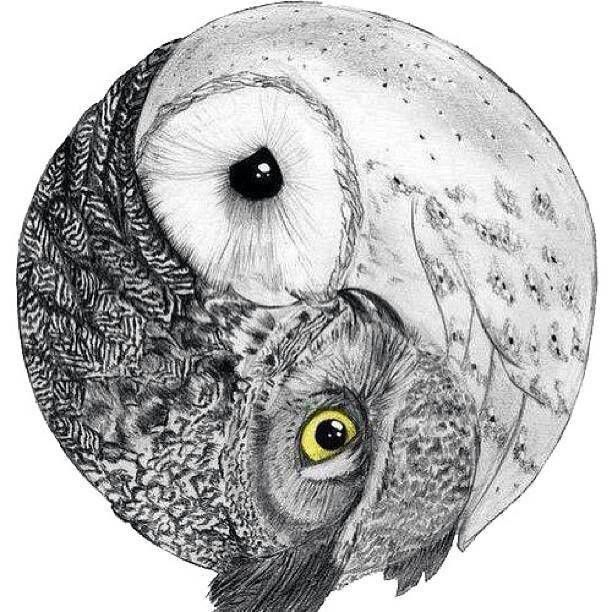 love the owl yin-yang....would keep barn owl and have a barred owl on the other side