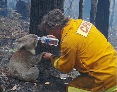 Australian Bush Fires still call Australia home Cute