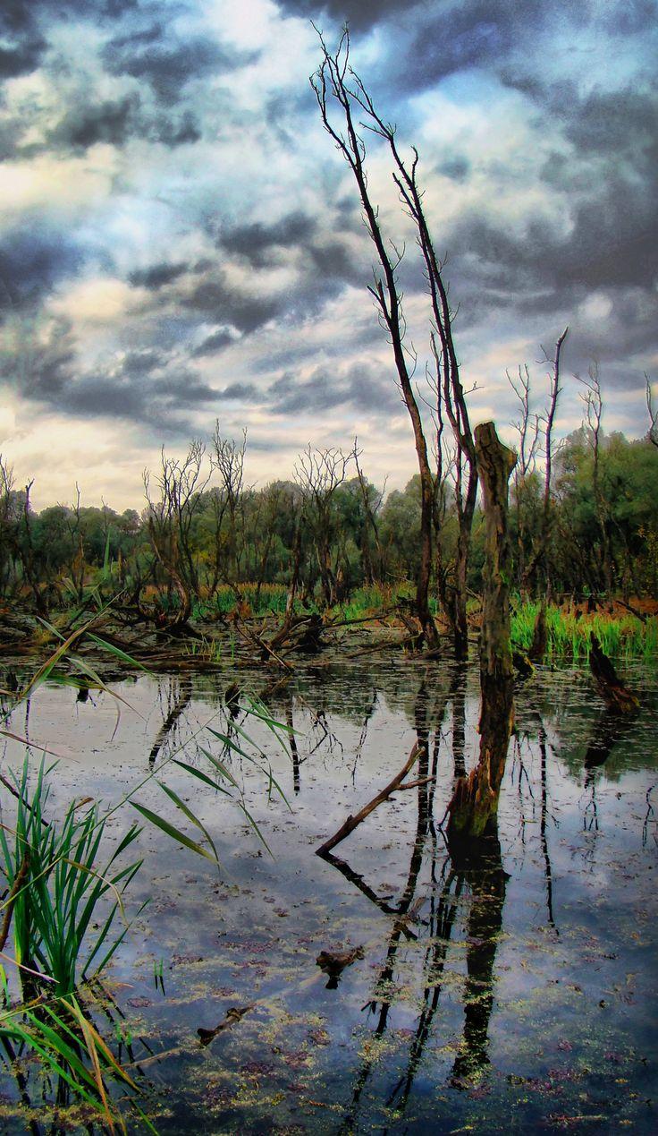 2014.10. Hungary, Mártély, early morning walk in the marsh -the parabola tree__kora reggeli séta a mocsárban -a parabóla fa__photo by Peter Farsang_©fapeter