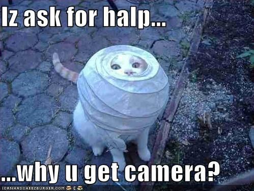 Funny.   Poor Kitty.: Lamps, Paper Lanterns, Funny Pictures, Camera, Cat Photo, Funny Cat Pics, Funny Animal, Chine Lanterns, Silly Cat