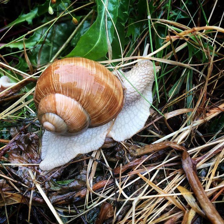 """@jagodowapolana oczywiście iść #slimak #mobile #1415mobilephotographers #mobilnytydzienwakacje #shotoniphone #snail """"Pnij się ślimaczku..."""""""