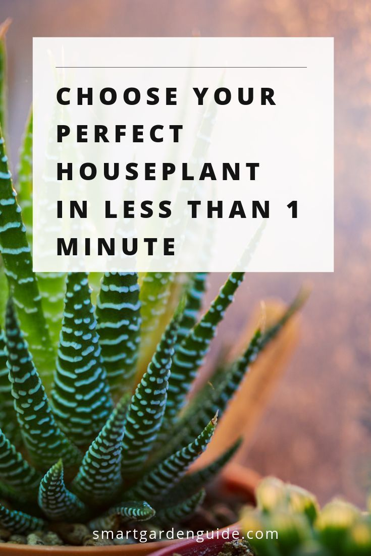 Choose Your Perfect Houseplant With Images House Plants Smart