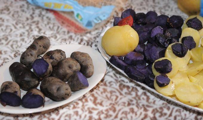 Le patate vitelotte Lady Viola