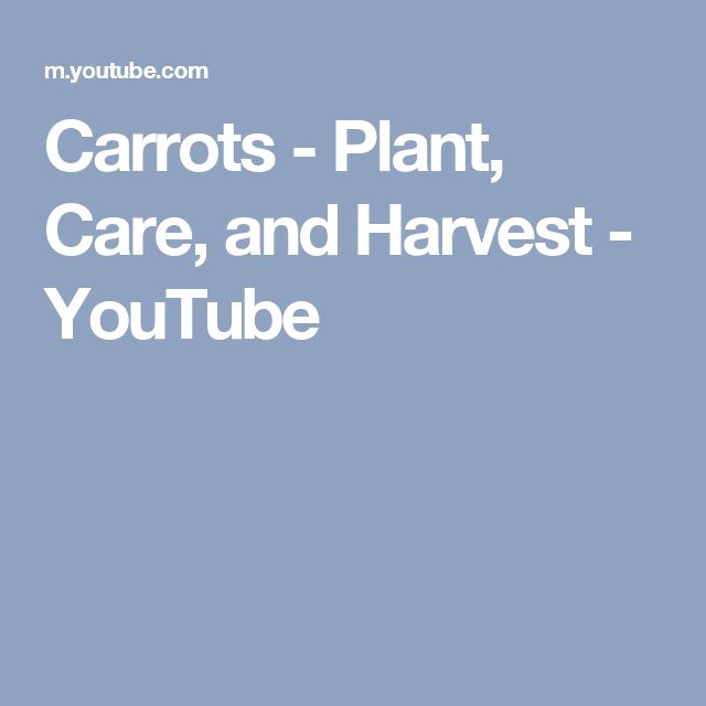 Carrots - Plant, Care, and Harvest - YouTube