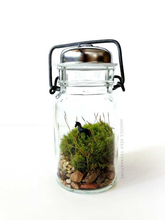 Foal Terrarium Horse Lovers Gift Set Antique Glass Jar