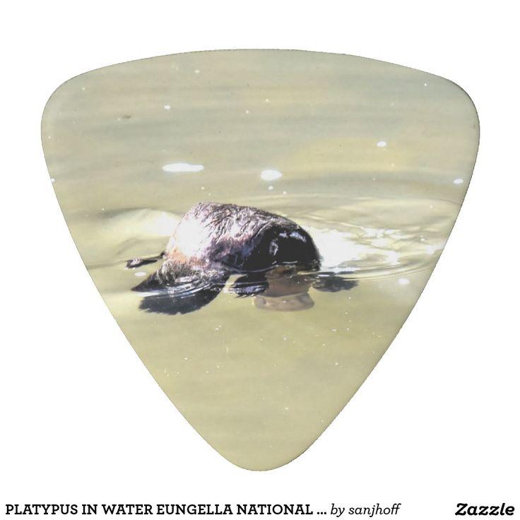 PLATYPUS IN WATER EUNGELLA NATIONAL PARK AUSTRALIA