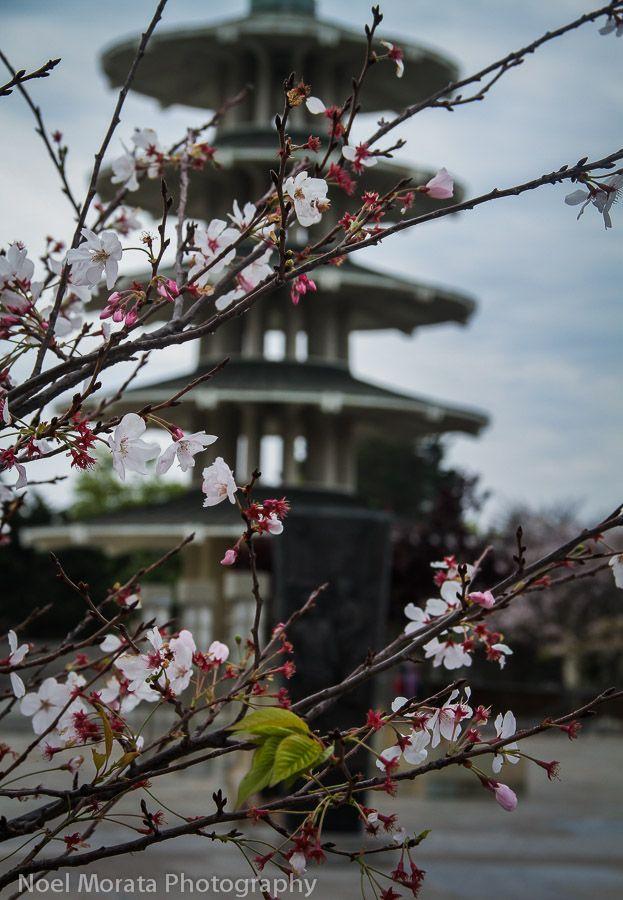 San Francisco Cherry blossom parade, Highlights of the festival and parade #SanFrancisco #Japantown