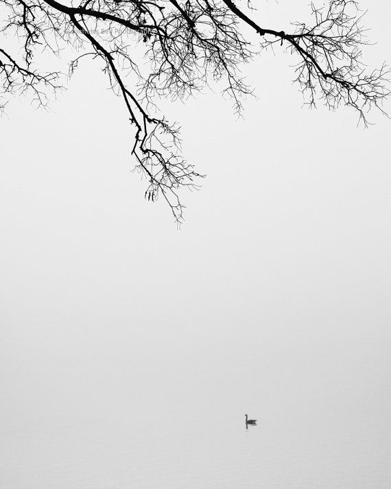 Willow tree, tree photography, tree print, lake house decor, trees in fog, zen, single tree, lake photography, winter tree