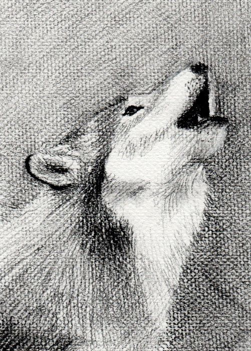 Wild Wolf Charcoal Drawing on Textured by YasmineRoblesDesigns, $16.00