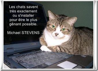 citations sur les chats - Căutare Google