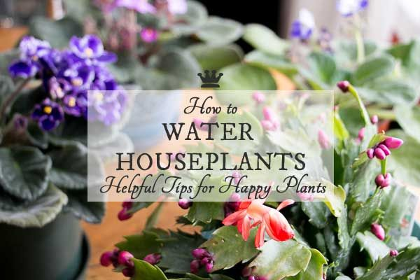 1000 ideas about water plants indoor on pinterest water - How often should you water your garden ...
