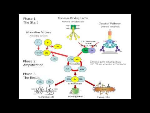 The Atypical HUS Foundation | Atypical Hemolytic Uremic Syndrome Information