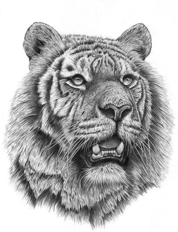 лучшие рисунки черно белые подъемным