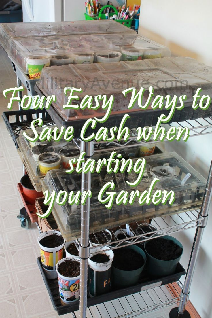 Four Easy Ways to Save Money when starting your Garden
