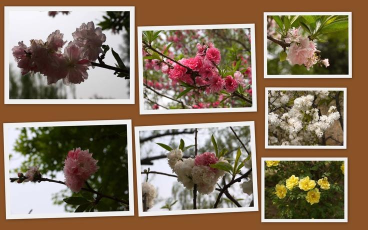 Spring in Beijing Plant Garden (3)