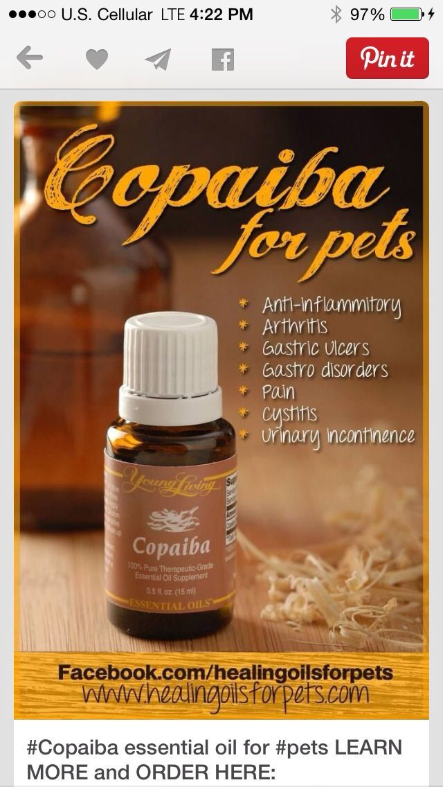 Small dog mix 1 part copaiba with 3 parts organic carrier