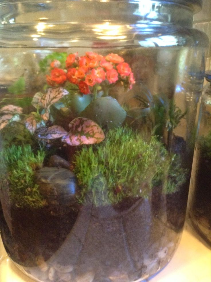 17 Best Images About How To Make A Terrarium On Pinterest