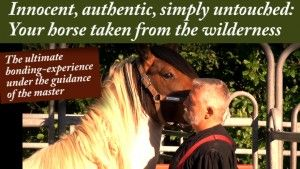 Your KFH-Wild-Horse Experience. Your best friend from wilderness | Klaus Ferdinand Hempfling
