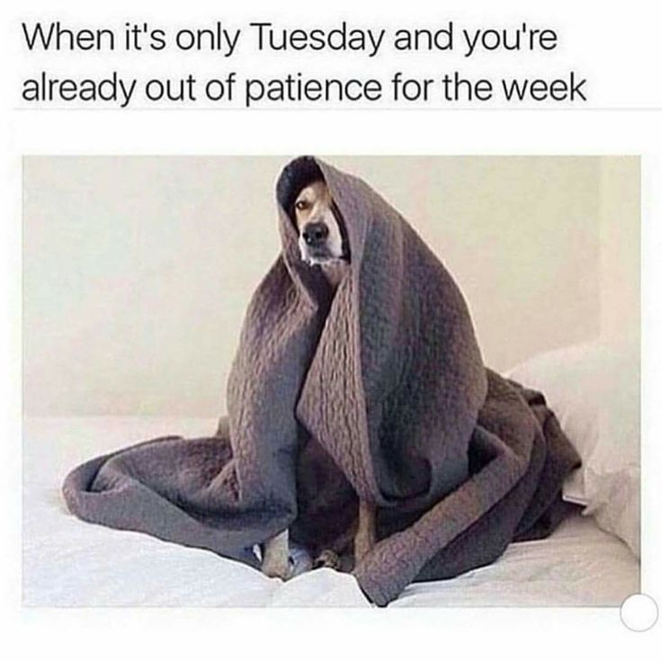 Only Tuesday