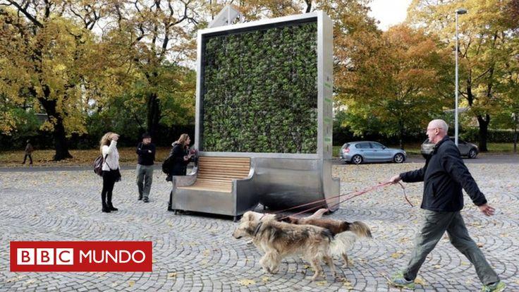 Diseñadores en Alemania crearon un árbol artificial con musgo que absorbe el dióxido de nitrógeno y la materia particulada de los autos. Aseguran que cada árbol brinda los servicios ambientales de 275 árboles naturales.