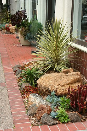WoW love the different color rocks the plant assortment! And amazingly this is outside a dept store!