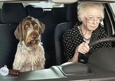 Driving Miss Daisy...: Old Age, The Roads, Dogs, Old Lady, The Face, Funny Stuff, Humor, Funnystuff, Animal