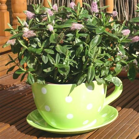 Garden: Botanico Green Polka Dot Cup & Saucer Planter