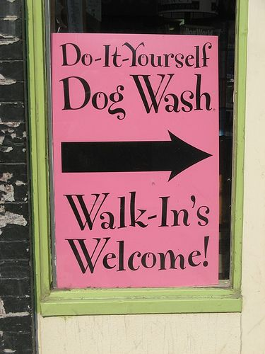 Pin by susana fonseca on business dog grooming spa for Tattoo shops in greeley