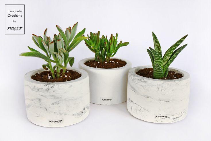 Concrete Cylindrical Pot  #greenery #concrete #succulents #plants #greece