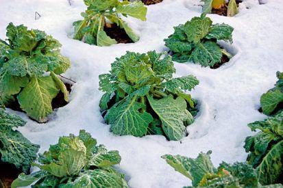 Ako na pestovanie zeleniny v chladných mesiacoch
